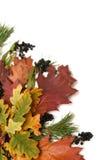 五颜六色的框架叶子 免版税图库摄影