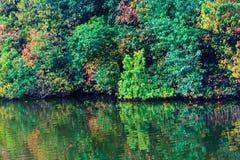 五颜六色的森林。 图库摄影