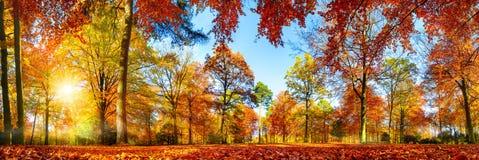 五颜六色的森林全景在秋天 库存图片