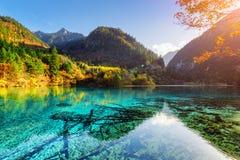 五颜六色的森林在五Flower湖的天蓝色的水中反射了 免版税库存照片