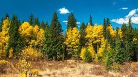五颜六色的森林在洛矶山国家公园,科罗拉多,美国 免版税库存图片