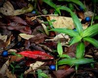 五颜六色的森林地板 库存图片