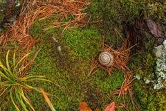五颜六色的森林地毯 库存照片