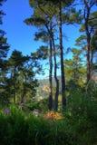 五颜六色的森林富有 库存照片