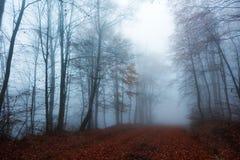 五颜六色的森林道路在秋天 库存图片