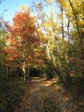 五颜六色的森林 库存图片