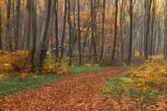 五颜六色的森林 库存照片