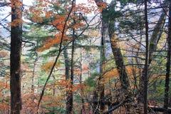 五颜六色的森林 免版税库存图片
