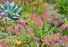 五颜六色的植物和花美丽的庭院  免版税库存图片