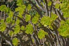 五颜六色的植物在庭院里 库存照片