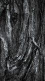 五颜六色的概略的树纹理特写镜头宏指令 免版税库存图片