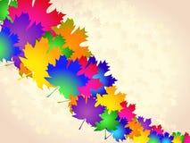 五颜六色的槭树叶子-抽象背景 免版税库存图片