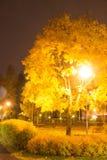 五颜六色的槭树在晚上 免版税库存图片