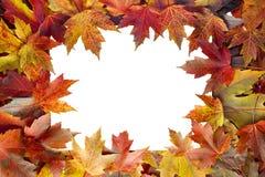 五颜六色的槭树秋天留下边界 免版税库存图片