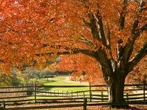 五颜六色的槭树 库存照片