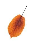 五颜六色的樱桃叶子秋天标志 库存图片