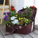 五颜六色的樱草属和喇叭花 免版税库存图片