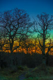 五颜六色的橡木足迹 库存图片