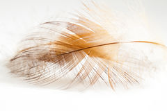 五颜六色的母鸡羽毛 免版税库存图片
