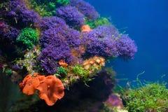 五颜六色的水下的世界 图库摄影