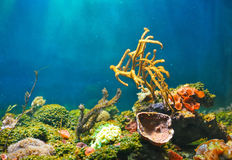 五颜六色的水下的世界 免版税库存照片