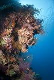 五颜六色的水下的热带珊瑚礁场面。 库存图片