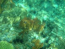 五颜六色的水下的珊瑚在海 库存图片