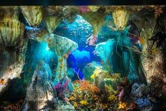 五颜六色的水族馆在日本 图库摄影