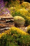 五颜六色的沙漠庭院 免版税库存图片