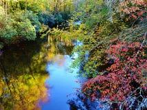 五颜六色的河沿秋叶 免版税图库摄影