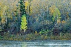 五颜六色的河结构树谷 图库摄影