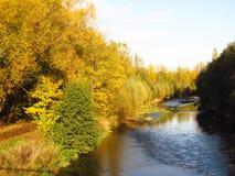 五颜六色的河结构树 库存照片