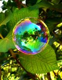 五颜六色的泡影喜欢花 库存照片