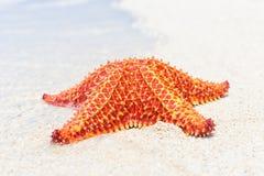 五颜六色的海星(海星)在海滩 免版税库存照片