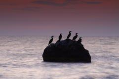 五颜六色的海景夏天 有鸟的岩质岛在日落 免版税库存照片