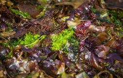 五颜六色的海草 库存照片