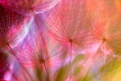 五颜六色的淡色背景-生动的抽象蒲公英花 免版税库存照片