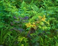 五颜六色的灌木 库存照片