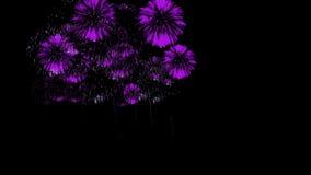 五颜六色的烟花晚上 壮观的firecrakers 3d回报 紫罗兰色版本53 股票视频