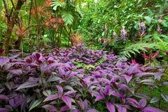 五颜六色的热带森林豪华的雨 免版税库存照片