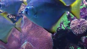 五颜六色的热带珊瑚礁 水下的鱼和珊瑚 股票录像