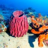 五颜六色的热带礁石横向 库存照片