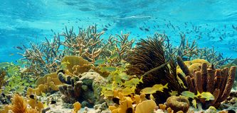 五颜六色的热带礁石 库存照片