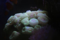 五颜六色的热带礁石 免版税图库摄影