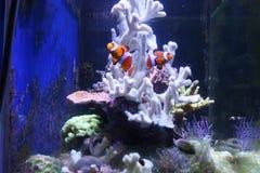 五颜六色的热带礁石 免版税库存图片