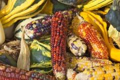 五颜六色的玉米和南瓜静物画图象 免版税库存图片