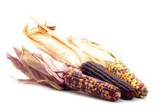 五颜六色的玉米查出的白色 图库摄影