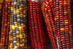 五颜六色的玉米棒子 免版税库存照片