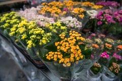 五颜六色的玫瑰和其他花花束在词条对花店在农夫`市场上 库存照片