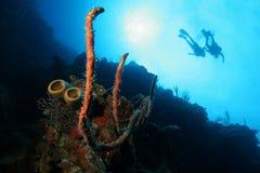 五颜六色的珊瑚潜水员水肺 库存照片